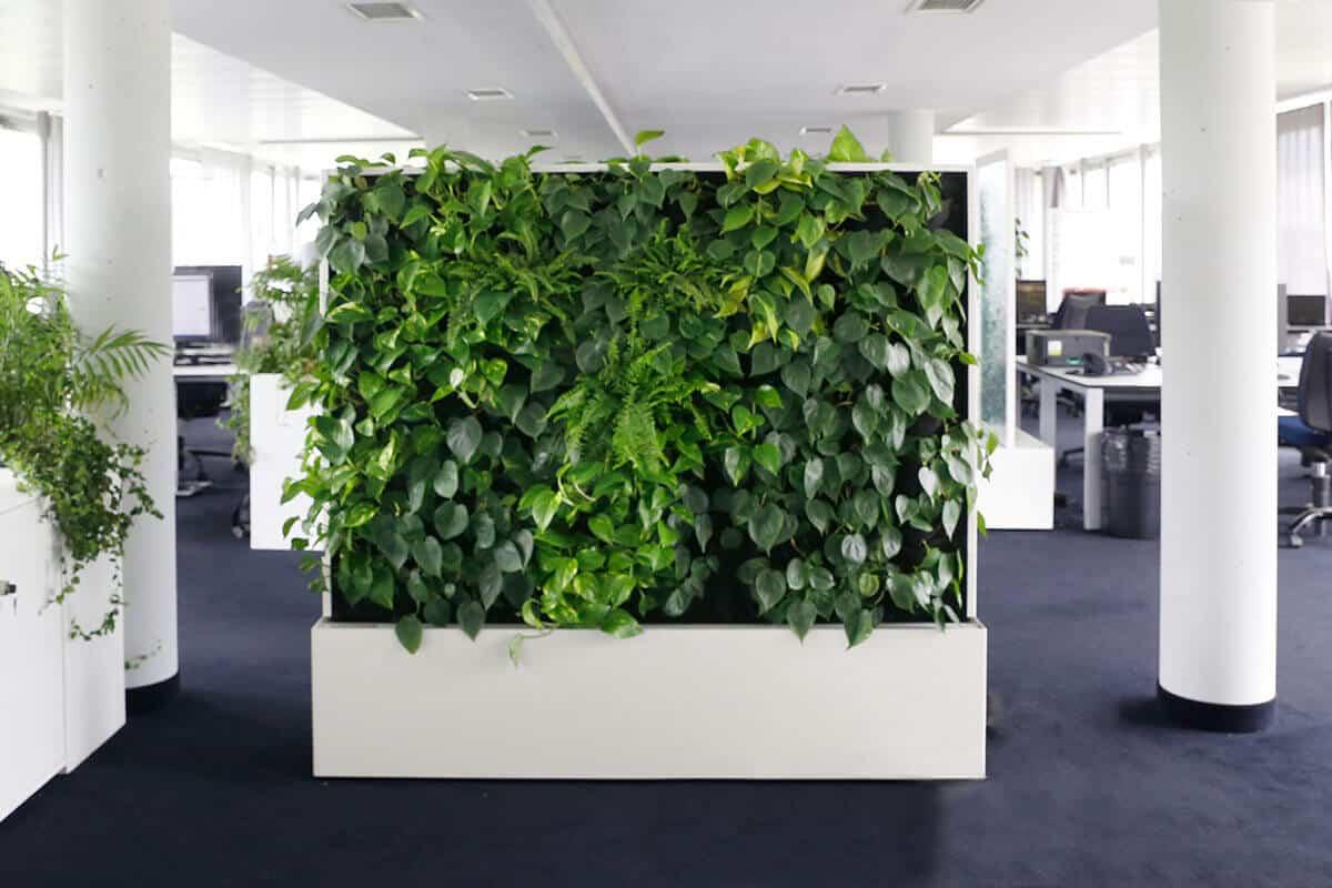 Grüne Wand in der Agentur in Stuttgart